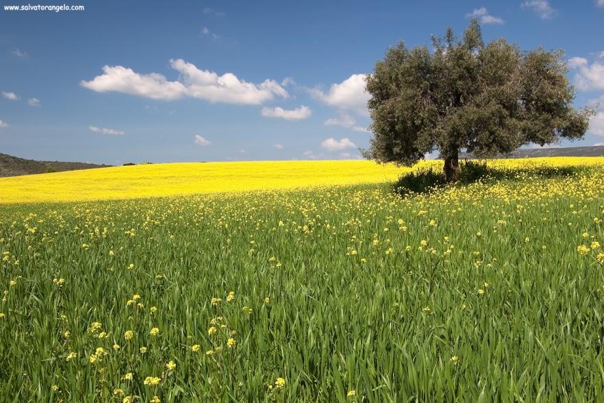 Primavera a DONORI - Sardegna