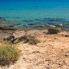 Elicriso - Sardegna
